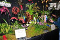 2010 Pacific Orchid Expo 14.jpg