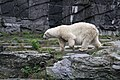 2012-09-15 Tierpark Berlin 14.jpg