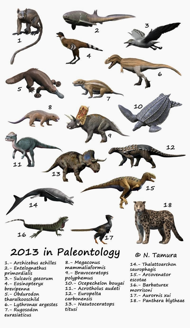 2013 in paleontology NT
