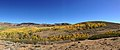 2014-10-04 13 02 01 Panorama of Aspens during autumn leaf coloration from Charleston-Jarbidge Road (Elko County Route 748) in Copper Basin about 6.9 miles north of Charleston, Nevada.jpg