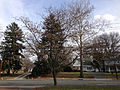 2014-12-30 13 09 33 Mimosa along Pennington Road (New Jersey Route 31) in Ewing, New Jersey.JPG
