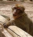 2016-04-21 14-18-29 montagne-des-singes.jpg