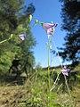20180708Campanula rotundifolia2.jpg