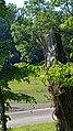 2020-08-09 Isar München nach der Flut 109.jpg