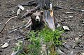 21-224-5054 Bear in NNP Synevyr RB.jpg