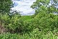 22 Остепненные склоны и балочные леса по правому берегу долины р. Осетрик.jpg