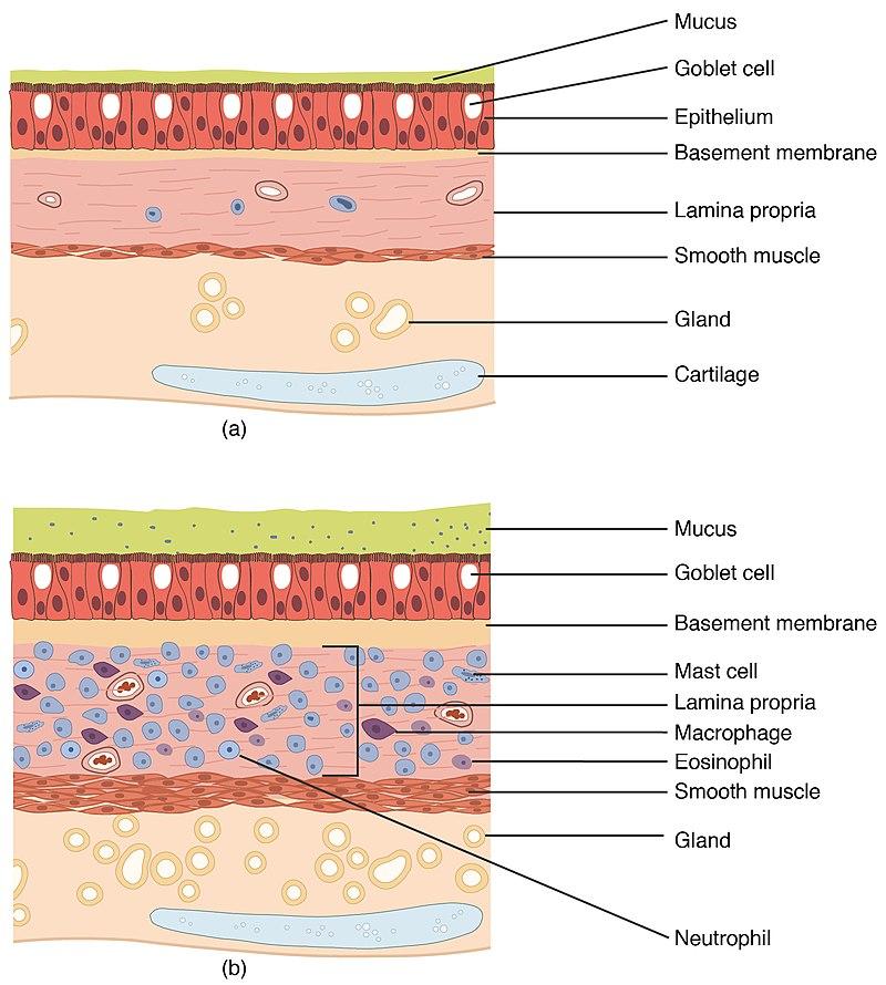2311 Lung Tissue.jpg