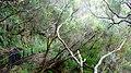 25 fontes levada madeira - panoramio - azoren66 (1).jpg