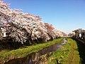 2 Chome Sazumachi, Chōfu-shi, Tōkyō-to 182-0016, Japan - panoramio.jpg