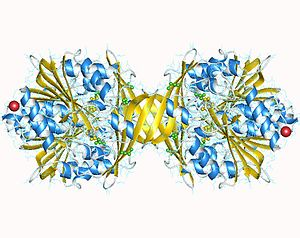 Glycine N-methyltransferase - Image: 2azt