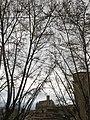 331 Santa Maria de Manresa, des de la Cova de Sant Ignasi.jpg