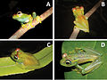 A-new-species-of-the-Boophis-rappiodes-group-(Anura-Mantellidae)-from-the-Sahamalaza-Peninsula-zookeys-435-111-g002.jpg