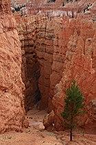A289, Bryce Canyon National Park, Utah, USA, 2008.JPG