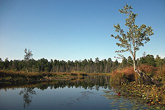 Pine Barrens (New Jersey) - Large open area with beaver dams on the Mullica River southeast of Lake Atsion