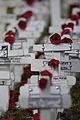 ANZAC poppy.jpg