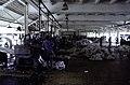 ASC Leiden - F. van der Kraaij Collection - 13 - 018 - The Firestone rubber plantation. Interior of the latex factory. Heaps of solidified rubber - Harbel, Montserrado county, Liberia - 1976.jpg