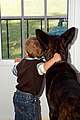 A Boy and His Dog (5069978280).jpg