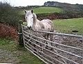 A Damp Horse - geograph.org.uk - 97778.jpg
