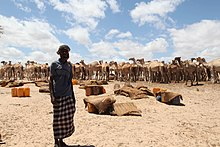 Somalischer Mann, der einen Ara trägt