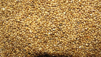 Panicum sumatrense - Image: A closeup fo Samai millet with husk