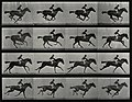 A galloping horse and rider. Wellcome V0048753.jpg