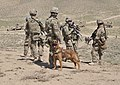A military working dog accompanies U.S. Soldiers conducting an inspection of an Afghan Border Police checkpoint near the Afghanistan-Pakistan border in the Spin Boldak district of Kandahar province, Afghanistan 130401-A-MX357-011.jpg