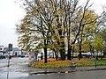 A splash of autumn colour, Shettleston (geograph 3225228).jpg