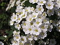 Ab plant 1782.jpg