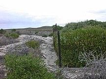 North Island-Mammals-Abrolhos North-Island2