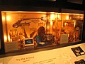 Academy of Natural Sciences, Philadelphia - IMG 7456.JPG