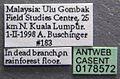 Acanthomyrmex ferox casent0178572 label 1.jpg