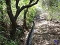 Acequia al lado de un árbol - panoramio.jpg