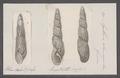 Achatina columnaris - - Print - Iconographia Zoologica - Special Collections University of Amsterdam - UBAINV0274 088 12 0011.tif