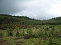 Achray Forest - geograph.org.uk - 1320743.jpg