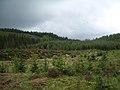 Achray Forest - geograph.org.uk - 1320743.jpg