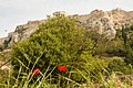 Acropolis And Wild Poppies (208722607).jpeg