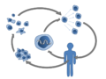 Adoptive T-cell therapy (not annotated).png