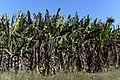Agricultores rurais recebem mais de R$ 300 mil em cartas de crédito do Prospera DF (27867212471).jpg