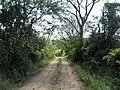 Alameda Cândido Brasil Moro - Palma - Santa Maria, foto 03 (sentido S-N).jpg - panoramio.jpg