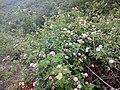 Alauva - Munnar Road Trip IMG 20170624 102248 (87).jpg
