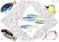 Aldabra13.jpg