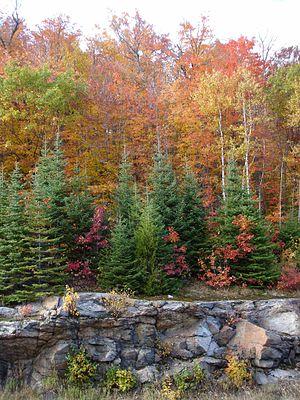 Algonquin Provincial Park - Autumn scene in Algonquin Park