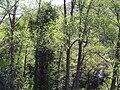 AlisedaFuentedeSanLorenzo 2010-4-08 SierraMadrona.jpg