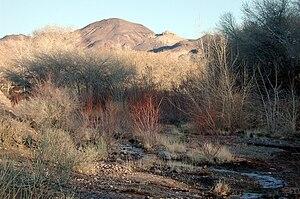 Beatty, Nevada - The Amargosa River flows through Beatty.