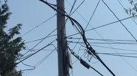 File:American red squirrels (Tamiasciurus hudsonicus) on wires.webm