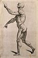 An écorché figure with left arm raised, seen from the left s Wellcome V0008023EL.jpg