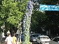 Anapa, Krasnodar Krai, Russia - panoramio (6).jpg