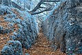 Ancient Sapphire Forest Trail - HDR (10430765615).jpg