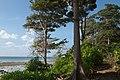 Andaman Islands, Neil, Trees at the beach.jpg