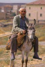 L'âne, une ressource dans ANE 150px-Ane_Cappadoce